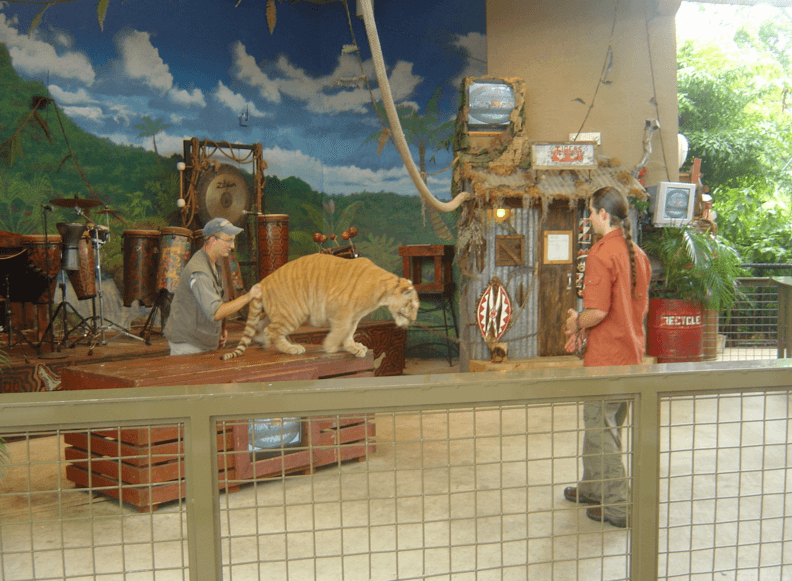 Baby Tiger Show