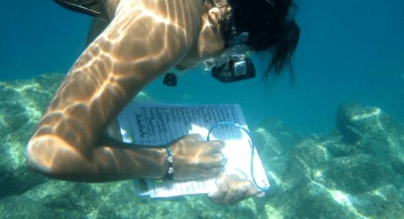 Marine Biology in Florida