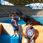 VIP Touch and Feed Sea Lion Miami