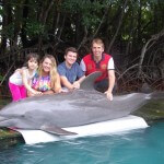 Touch and Feed a Dolphin VIP Miami