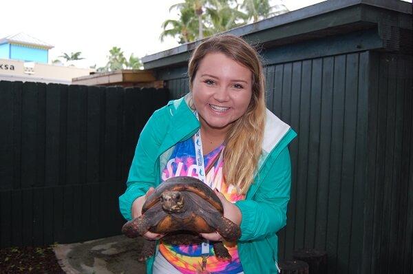 turtle-vip
