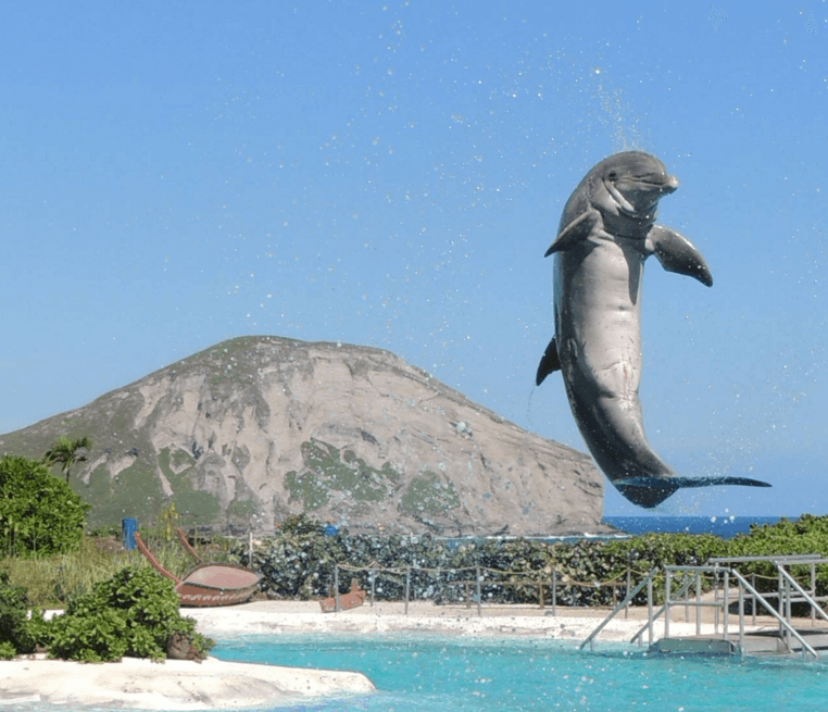Animal Excitement in Oahu