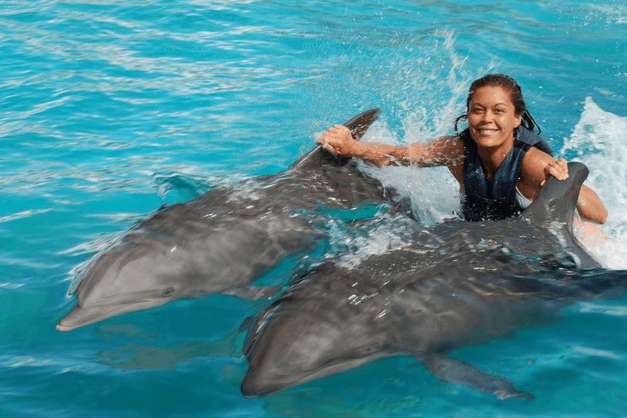 Dolphin Swim Oahu