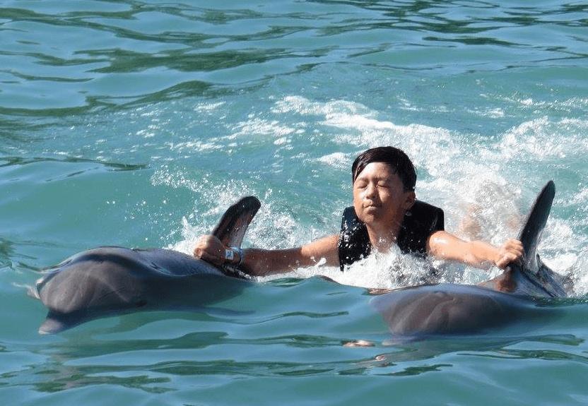 montego bay jamaica dolphin swim