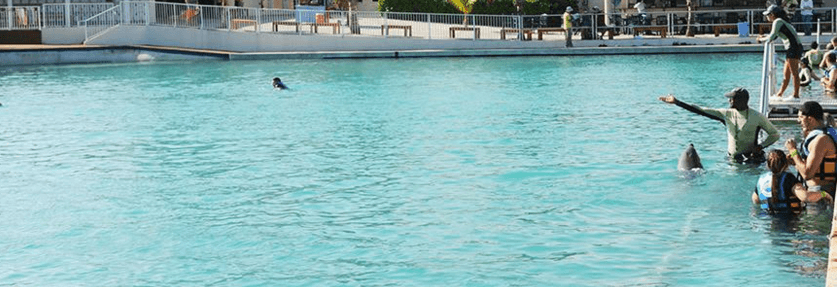 Grand Cayman Dolphin Program