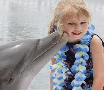 Meet the Dolphins in Islamorada Keys