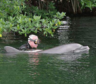 Snorkeling with Dolphins in Islamorada Keys