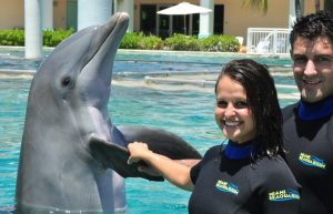 Peck Hold Dolphin Encounter Miami