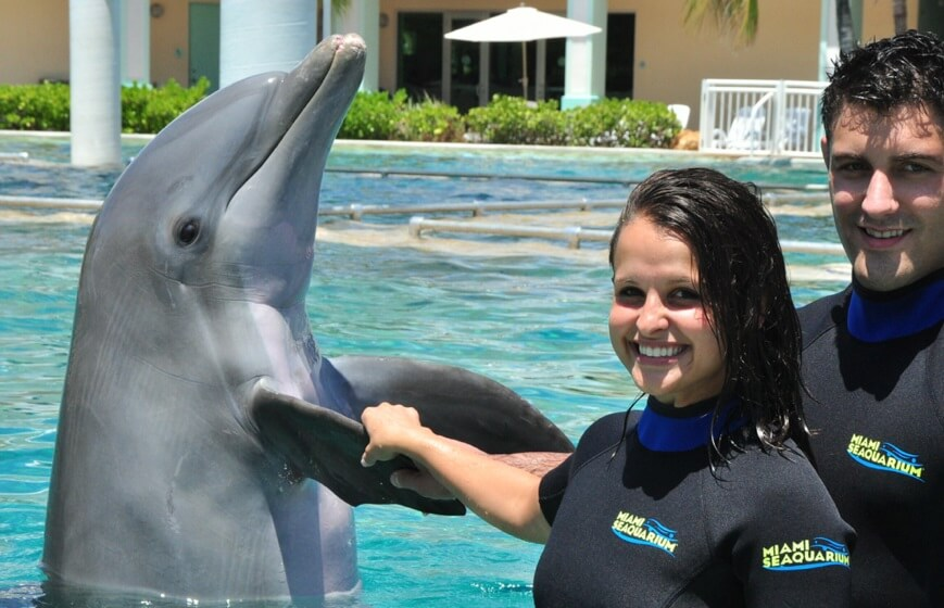 Peck Hold Dolphin Swim Miami