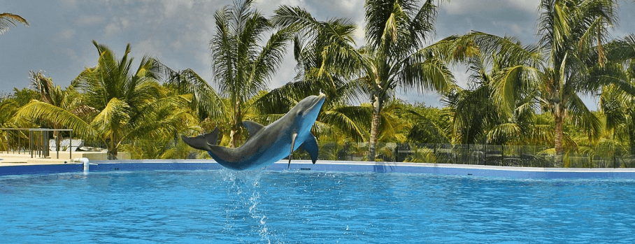 dolphin_punta_cana_header