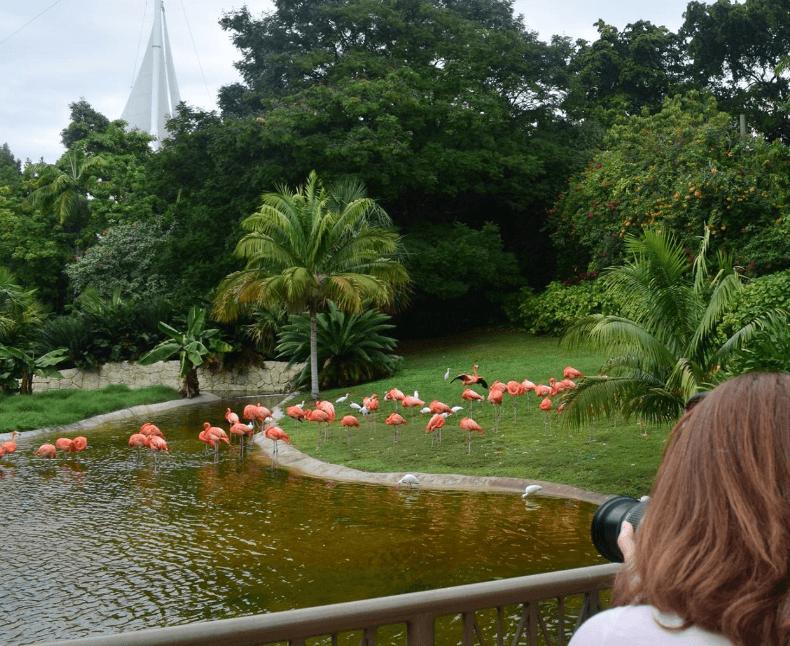 Jungle Island Park