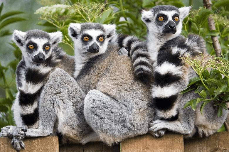 Lemur Experience
