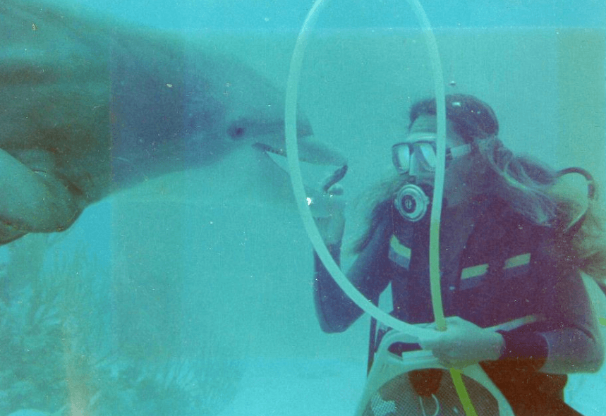 Training and Taking Care of Dolphins