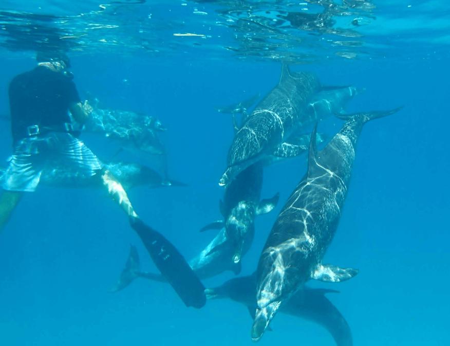 Wild Dolphins in Bimini Bahamas