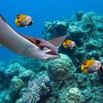 Hawaiian Reef Encounter