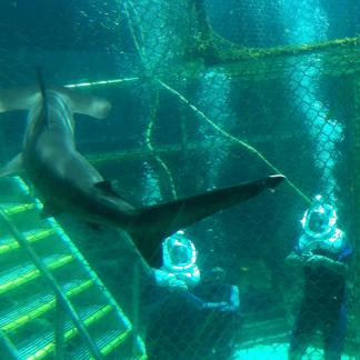 Shark Trek Oahu Hawaii