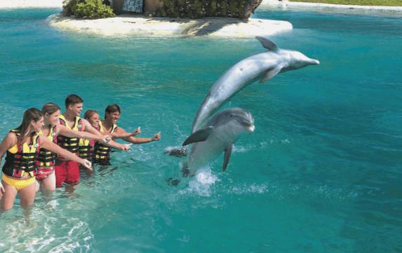 Dolphin Encounter Oahu Hawaii Tricks