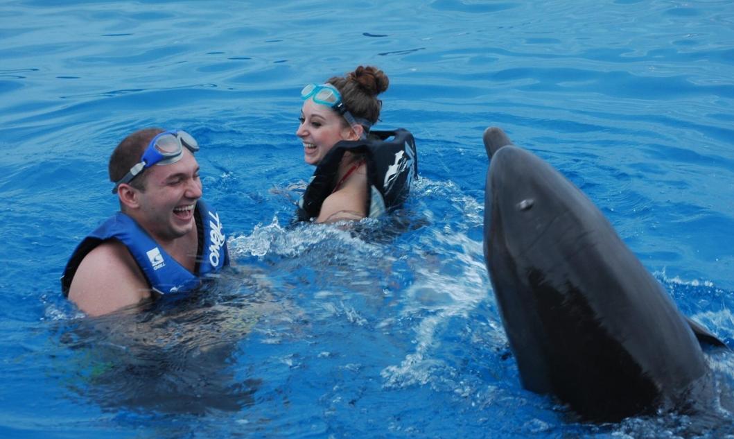 Dolphin Swim St Augustine