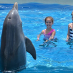 dolphin encounter panama city beach