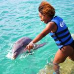 Dolphin Moment St Thomas